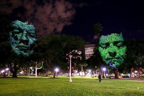 Австралійський митець влаштує світлове шоу на деревах у Києві