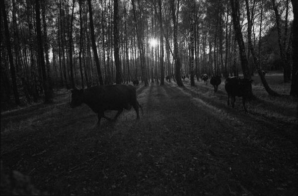 Олександр Примак створив фотопроект про мікросвіт українського села